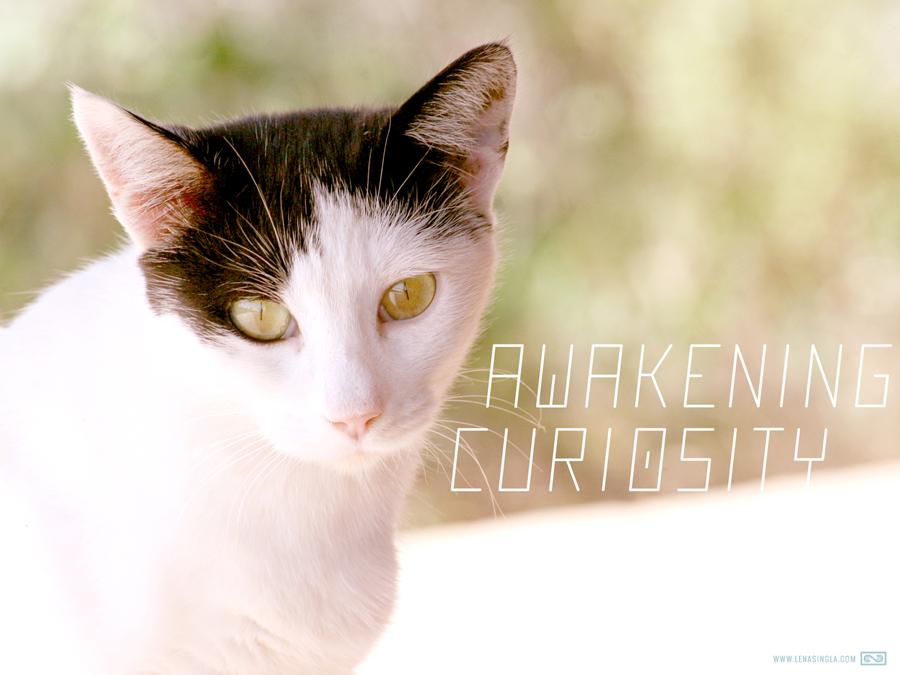 awakeningcuriosity_fullscreen